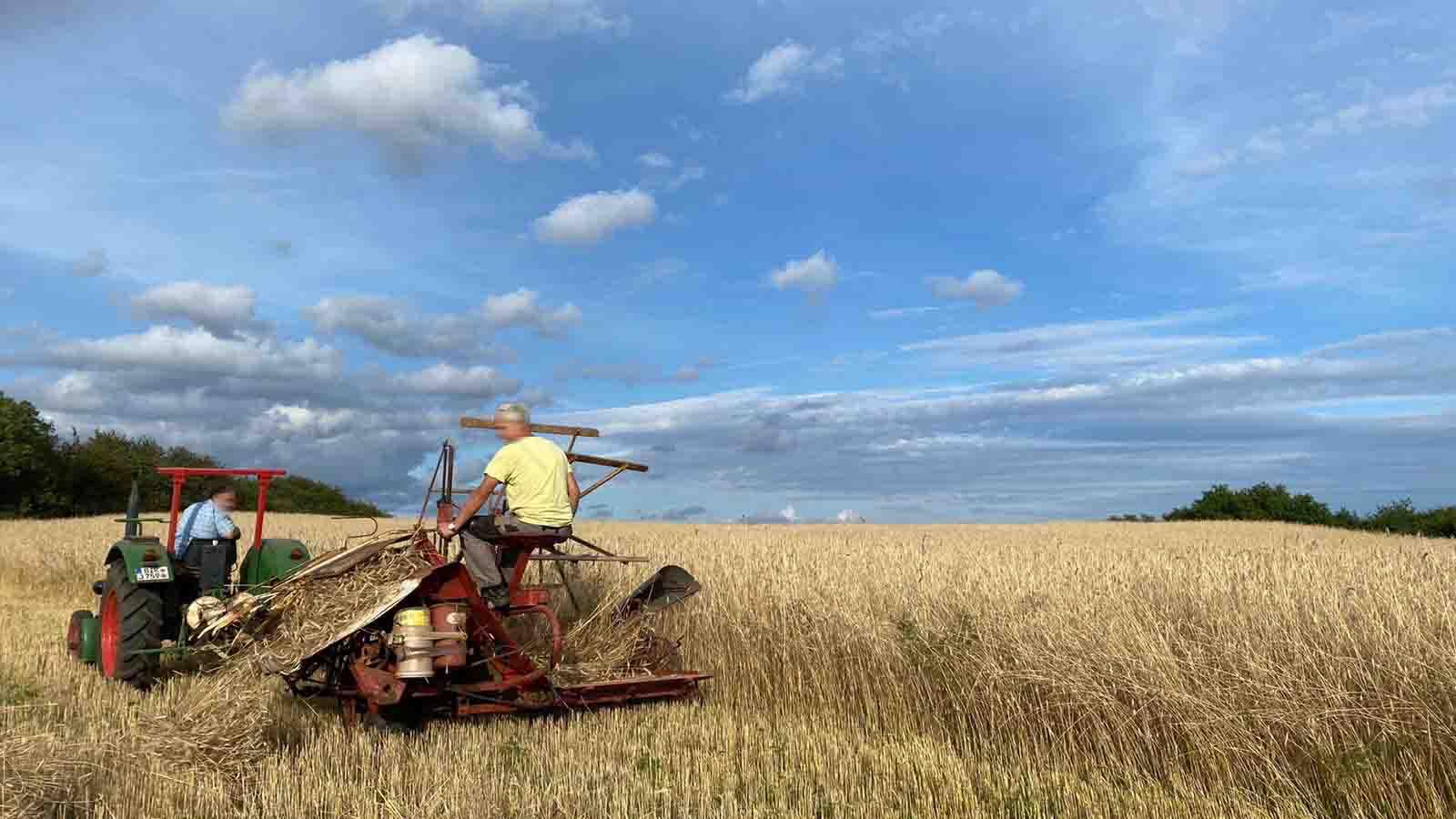 Ernte der Strohgarben mit historischen Landmaschinen